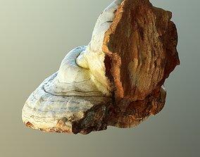 3D asset Forest Mushroom - Polypore - Ganoderma