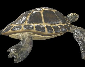 Turtle 3D model realtime swimming