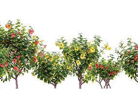 3D model Chinese hibiscus - Hibiscus rosa-sinensis - 01