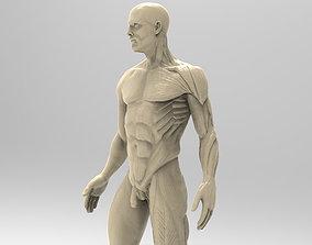 biology 3D printable model Man Anatomy