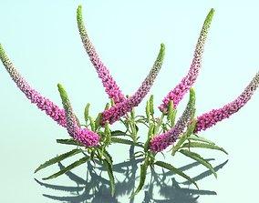 Summer Lilac Buddleja Davidii Butterfly Bush 3D asset