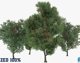 Melia Azedarach Trees Optimized 3D asset