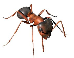 3D Ant Rigged