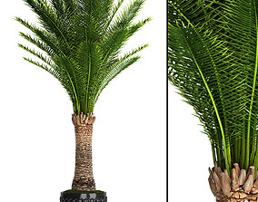 Date palm 1 3D model