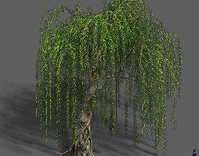 3D model Plant - Willow 12