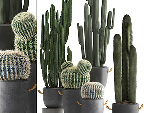 3D model Collection of Exotic Cactus Plants 411