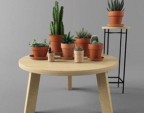 3D plant Cactus set