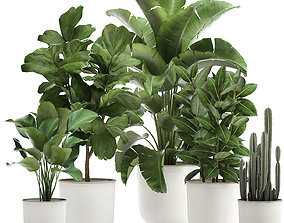 Houseplants in a white pot for the interior 3D model