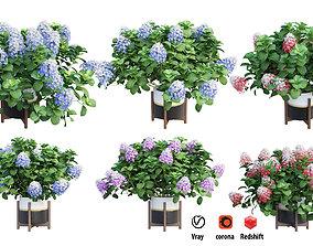 Plants Hydrangea set 10 branch 3D model