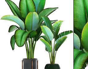3D Ravenala palm 3