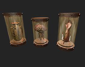 Preserved Specimen 3D model
