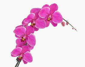 decoration Orchid 3D model