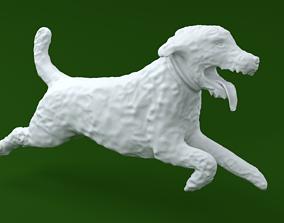 Labradoodle Dog 3D print model