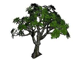 Frangipani Tree 3D model low-poly
