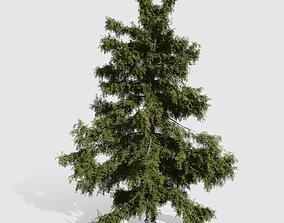 Alaska Cedar tree collection 9 trees in the scene 3D asset