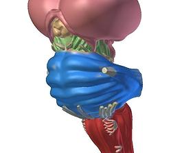 3D printable model Layout brainstem Anatomy