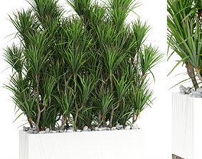 3D Plants collection 428