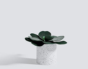 3D model Small Echeveria Bud