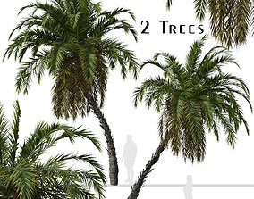 3D model Set of Phoenix reclinata or Senegal date palm 3