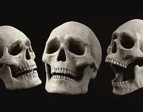 Skull Human Skeletal PBR 3D asset