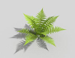 low poly fern 3D model low-poly