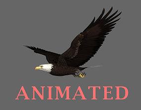 3D model loop flight animation of a realistic Bald