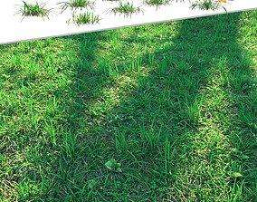 3D Lawn Grass