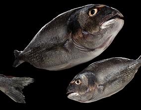 Dorada Low Poly Fish 3D model