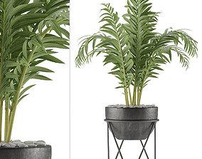 House Plant 39 3D model