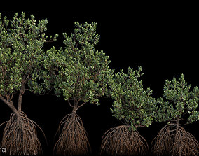 nature 3D model Grey Mangrove