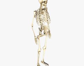 ribcage 3D model Human Skeleton