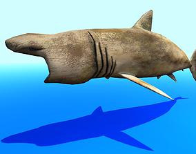 Shark 3D Model animated