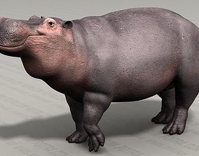 3D model Hippo - Hippopotamus Amphibius - Adult Male - 3