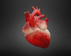 Human Heart 3D asset