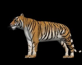 rigged CGI Tiger Rigged 3D Model