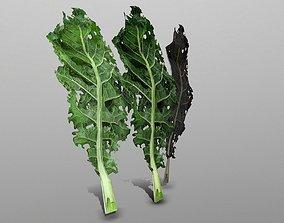 3D asset Kale Leaf