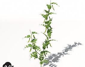 3D model XfrogPlants Peas