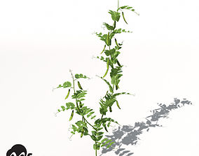3D model XfrogPlants Peas