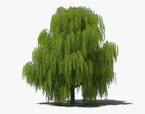 Willow Tree sallows 3D