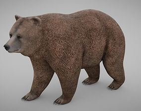 3D model realistic Bear