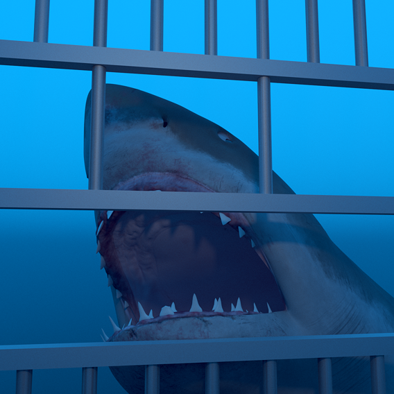Great white shark - Cage diving attack