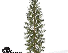 3D XfrogPlants Douglas Fir 1