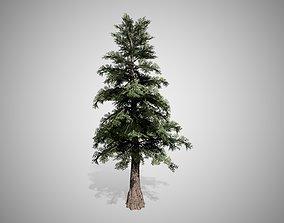 3D model Western Red Cedar Tree