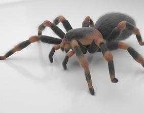 3D model animated Tarantula