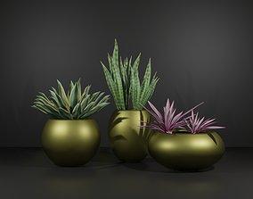 3D asset game-ready Indoor plant sansaveria