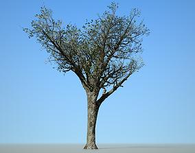 3D model Broadleaf 004