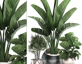 Decorative plants in flower pots for the interior 3D model
