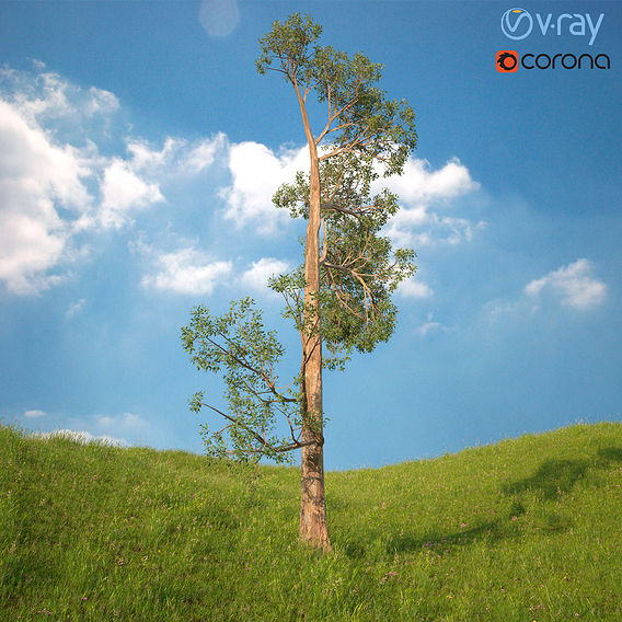 Tree 3d Model No 4