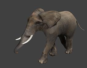 Elephant 3D asset animated game-ready