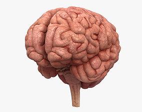 nervous Human Brain 3D